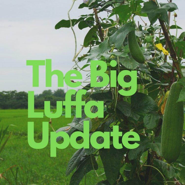 Luffa Update