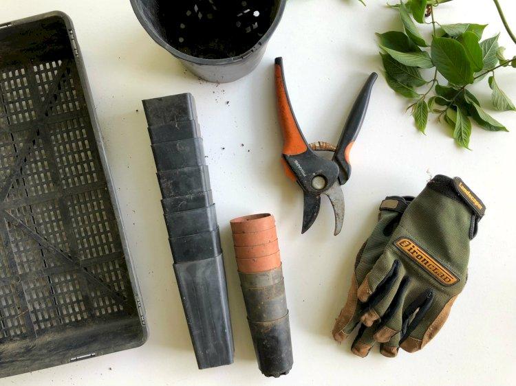Three tipsto Ramp Up Your Garden