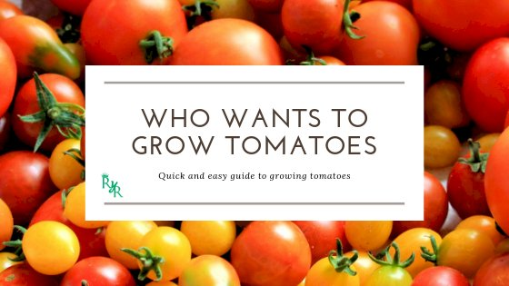 Who wants to grow tomatoes!