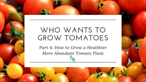 How to Grow a Healthier More Abundant Tomato Plant
