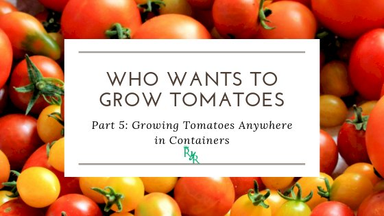 Growing Tomatoes Anywhere in Containers