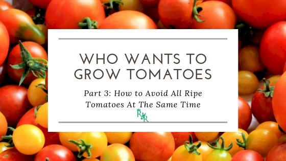 How to Avoid All Ripe Tomatoes At The Same Time