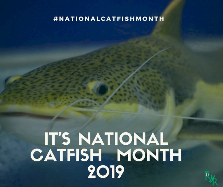 It is national Catfish month! Did you know?
