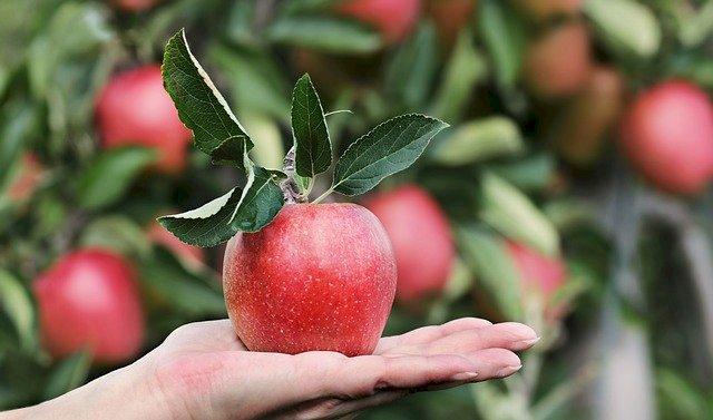 Apples  The Health Benefits