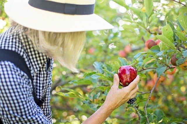 Let's Go, Apple Picking